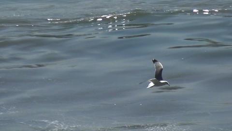 Seagulls (1) Live Action