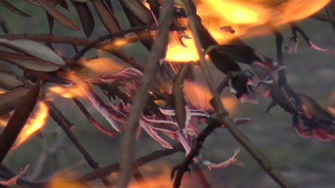 Details of Some Burning Branches 2 Live Action