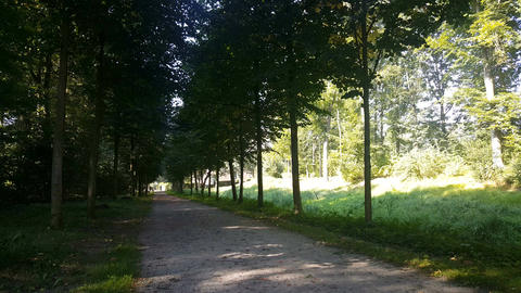 Avenue of trees in Netherlands Footage