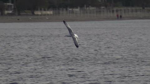 Seagull Flies Near the Beach (1) Live Action
