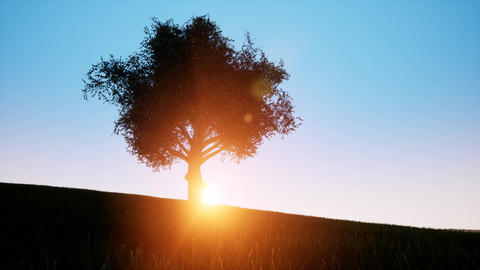 Banner on green backdrop. Tree, oak, leaf. Nature landscape. Rural landscape Live Action