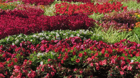 Beautiful flower bed in the park on a summer day Live Action