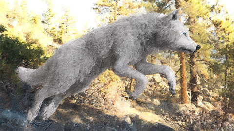 Digital artistic sketch animation of a wolf based on a self-created 3D illustration Animation