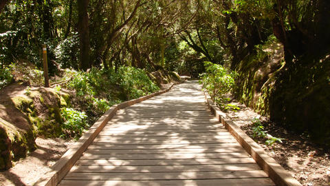 4k video of walking on wooden path in beautiful forest at mountains. Perfect Live Action