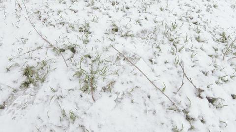 Lawn grass under snow ライブ動画