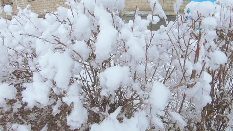 Snow falling on bushes ライブ動画