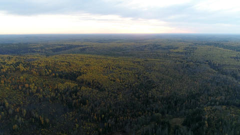 Bird's eye view of forest at evening sunset Live Action
