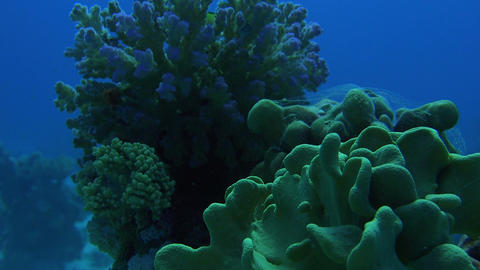 beautiful underwater coral formations and fish inhabiting them Footage