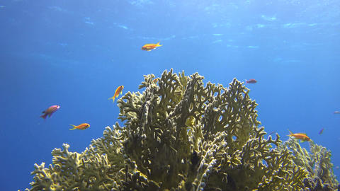 the sun shines on beautiful corals and orange fish in the sea Footage