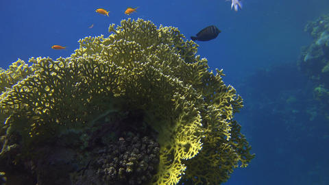 colorful corals and fish in the sea, illuminated by the sun Footage