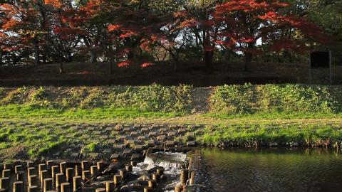 River / Sound / Autumn Leaves - Nogawa River / Musashino Park (Tokyo, Japan) - F Footage