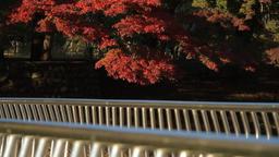 Autumn Leaves / Fall Colors / Bridge - Musashino Park (Tokyo, Japan) - Fix ビデオ