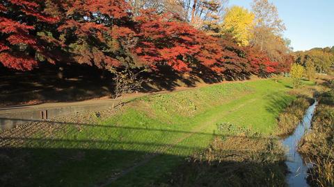 Autumn Leaves / Fall Colors / River - Musashino Park (Tokyo, Japan) - Fix ビデオ