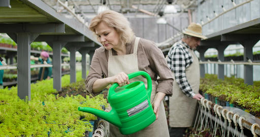 Portrait of confident mature Caucasian woman in apron pouring water on plants in Live Action