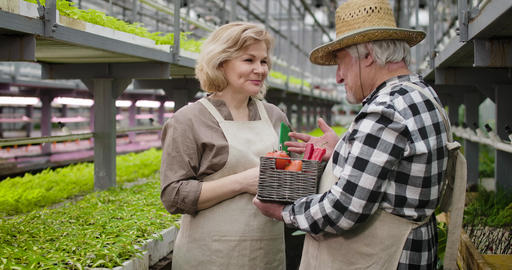 Positive Caucasian woman listening to mature gardener in straw hat and taking Live Action