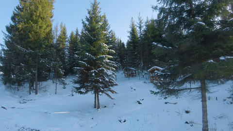 Aerial view of the spruce and snowy landscape around. Between the trees are Acción en vivo