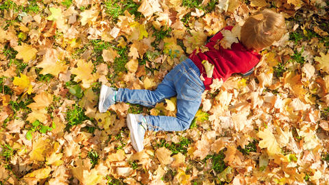 4k video of happy laughing little boy having fun and rolling on yeallow leaves Live Action