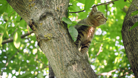 4k video of little grey kitten sitting on high tree branch and afraid of going Live Action