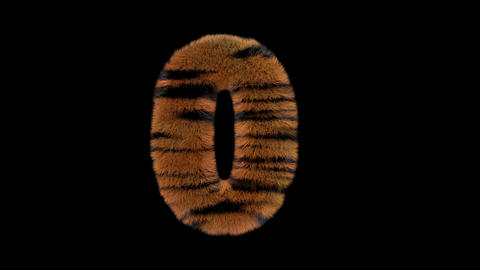 3D animated furry hairy zoo Tiger text typeface with alpha channel 0 Animation
