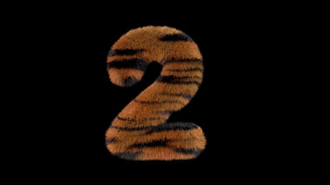 3D animated furry hairy zoo Tiger text typeface with alpha channel 2 Animation