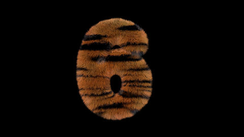 3D animated furry hairy zoo Tiger text typeface with alpha channel 6 Animation