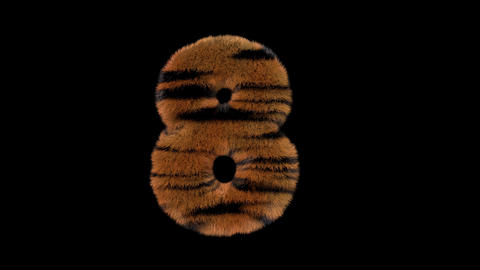 3D animated furry hairy zoo Tiger text typeface with alpha channel 8 Animation