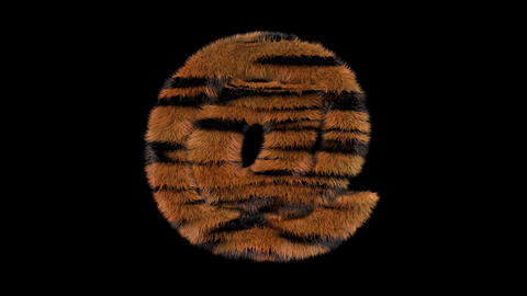 3D animated furry hairy zoo Tiger text typeface with alpha channel at Animation