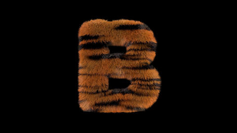 3D animated furry hairy zoo Tiger text typeface with alpha channel B Animation