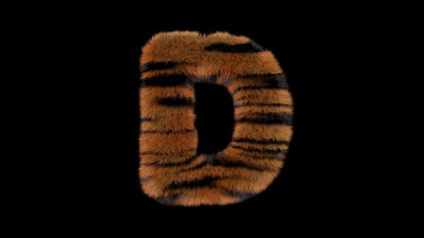 3D animated furry hairy zoo Tiger text typeface with alpha channel D Animation