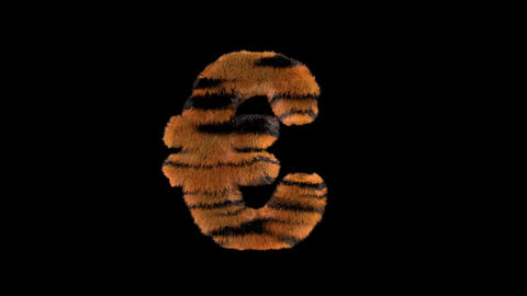 3D animated furry hairy zoo Tiger text typeface with alpha channel Euro Animation