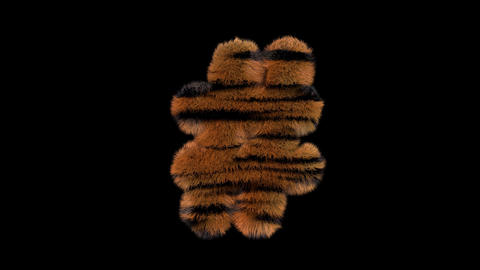 3D animated furry hairy zoo Tiger text typeface with alpha channel hashtag Animation