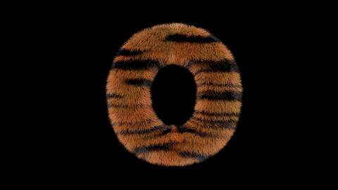 3D animated furry hairy zoo Tiger text typeface with alpha channel O Animation