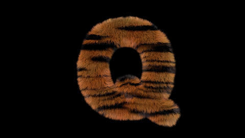 3D animated furry hairy zoo Tiger text typeface with alpha channel Q Animation
