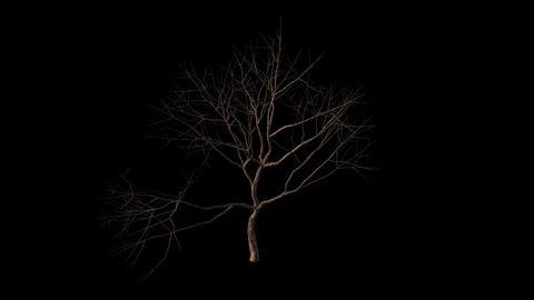 Looping Dry Tree Animation