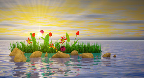 Flowers and stones in water Photo