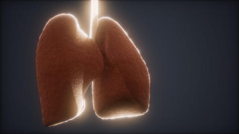 loop 3d rendered medically accurate animation of the human lung GIF