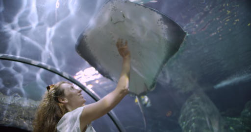 Woman in the oceanarium touches the glass in the place where a cramp-fish Acción en vivo