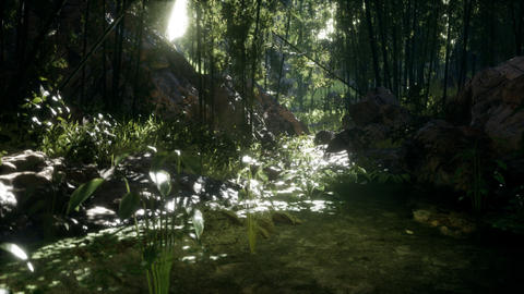 Lush green leaves of bamboo near the shore of a pond with stones GIF