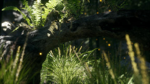 horizontally bending tree trunk with ferns growing, and sunlight shining GIF