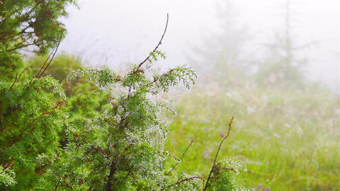 Spider Web with Dew Drops Footage