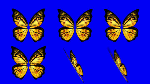 A set of Yellow Butterfly Wings Waving in Different Speed and Angles on a Blue S Footage