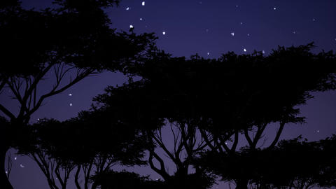 Black silhouettes trees against stars in beautiful style on blue background Live Action