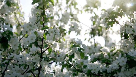 Blossoming Spring Garden 1