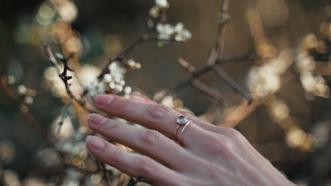Close-up of hands touching first spring flowers. Spring flowering. Sunlight Live Action