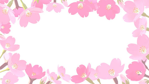 Cherry Blossoms Background Animation