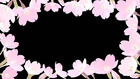 Light Color Cherry Blossoms with Alpha Channel Animation