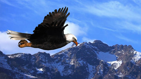 Bald Eagle Flies in the Mountains Animation Live Action
