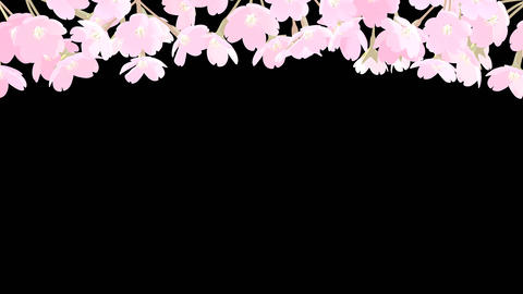 Cherry Blossoms at the Top with Alpha Channel Animation