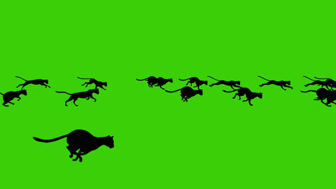 Cartoon Animated of a Big Group of Running Black Cats on a Green Screen Backgrou Live Action
