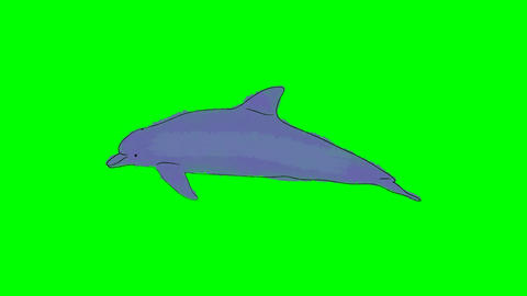 Real Cartoon Dolphin Swimming on a Green Screen Background Footage